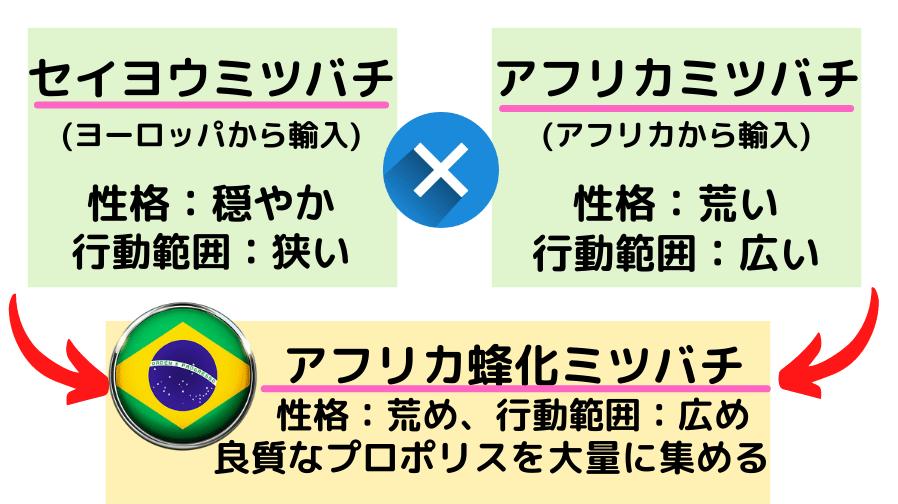 ブラジル産プロポリスの効能がすごい!「世界最高」の理由と人気商品2つ